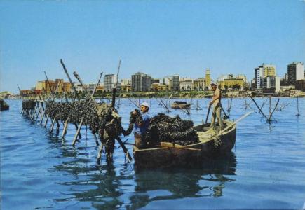0011 Taranto-Mitilicoltura In Mar Piccolo