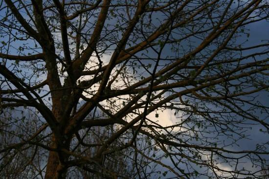Foto Aprile 2007, Pasqua, Varie 087